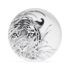 Блюдо Farforite «Амурский тигр» в подарочной коробке, белое / серое фото