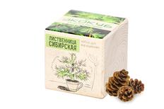 Набор для выращивания Экокуб, лиственница сибирская фото