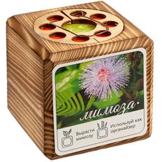 Набор для выращивания с органайзером «Экокуб Burn», мимоза, коричневый фото