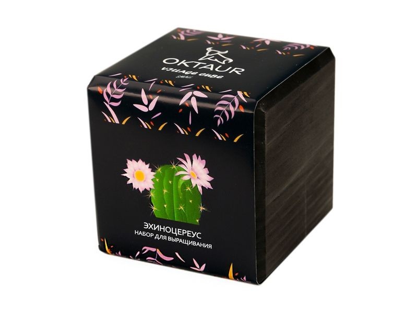 Набор для выращивания Small Village Cube «Эхиноцереус», черный - фото № 1