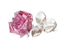 Цветущая роза, прозрачный, розовый фото