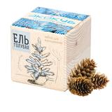 Набор для выращивания «Экокуб», ель голубая фото