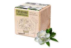 Набор для выращивания Экокуб, гардения жасминовидная фото